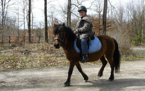Hodinová vyjížďka na koni pro děti a začátečníky do 100 kg2