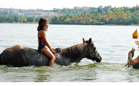 Vyjížďky, výcvik i plavení koní: 60 až 180 minut