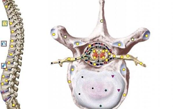 Nejvyspělejší neinvazivní NLS diagnostika zdravotního stavu přístrojem Metatron + 3D skenování a konzultace5