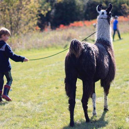 Vyjížďka na koních i procházka s lamou či poníkem