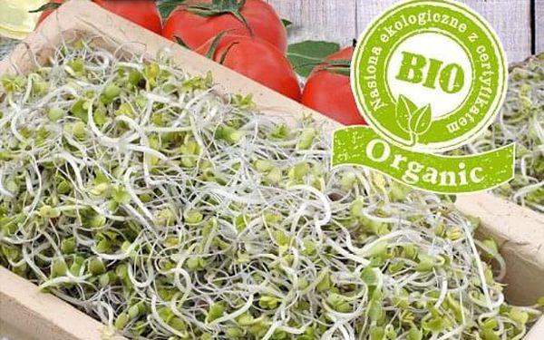 Brokolice ke klíčení 10 g4
