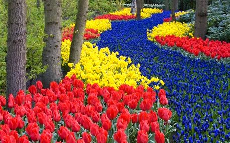 Holandsko Květinové korzo 2020, Amsterdam, Keukenhof, Zaanse Scha...