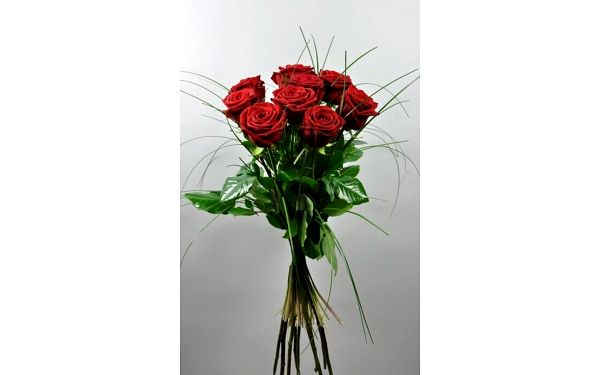 9 růží, 60 cm2