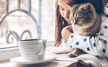 Čaj z čerstvého ovoce a koláč v kočičí kavárně
