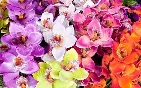 Výstava orchidejí v Drážďanech, Sasko