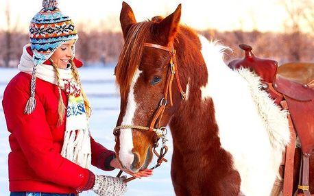 Hodinová vyjížďka na koni do přírody pro 1 nebo 2