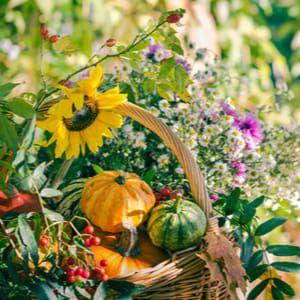 Podzimní zahrada: Na co při péči nezapomenout?