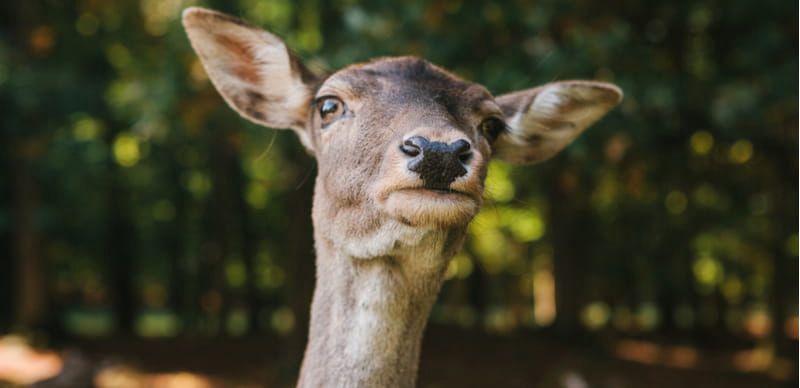 Výlety za zvířátky v Čechách