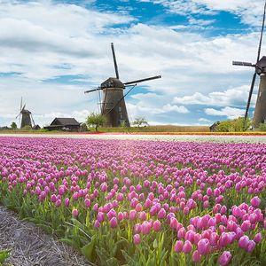 Holandsko: Země tulipánů právě rozkvétá