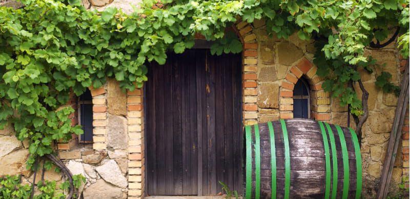 Pobyty s vínem: 8 důvodů, proč se na ně vydat